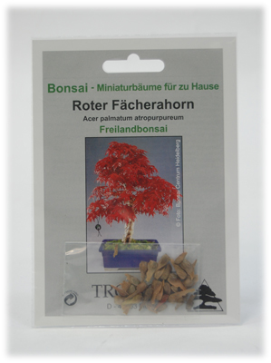 roter f cherahorn bonsai saatgut ahorn baum miniatur ebay. Black Bedroom Furniture Sets. Home Design Ideas